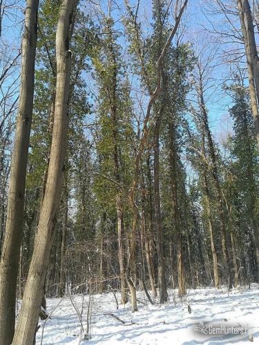 Čarobna šuma